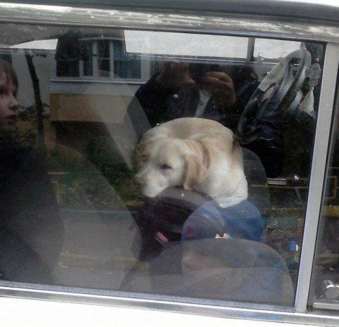 Операцию по спасению собаки из запертой машины провели полицейские в Москве