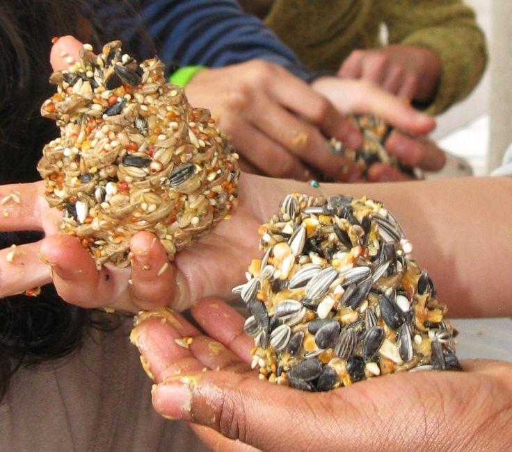 Aider les oiseaux à se nourrir en fabriquant des mangeoires et des boules de graisse
