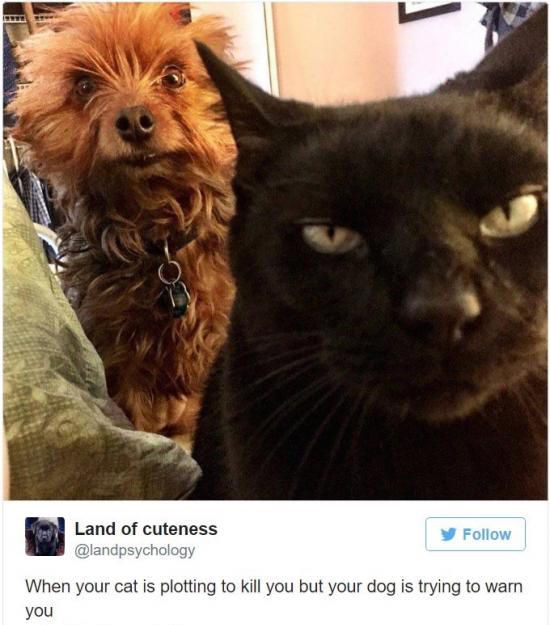 The Best Funny Pictures Of Today's Internet  RuinMyWeek.com #funny #pictures #pics #photos #hilarious #humor #comedy #joke #jokes #cute #cat #cats #dog #dogs #animals