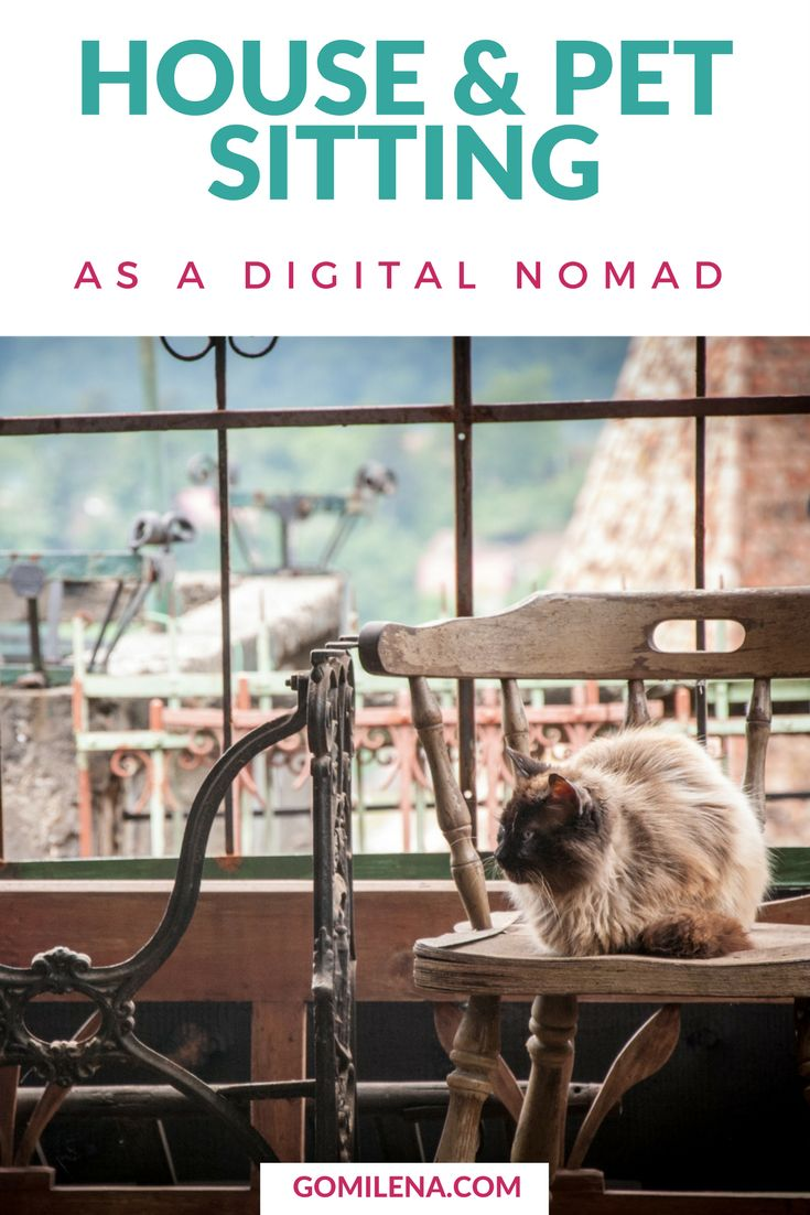 Pet and house sitting allows you to live in homes of other people in exchange of taking care of their property or pets. Good opportunity for digital nomads.