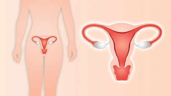 Hysterectomy What Your Doctor Won T Tell You Everyday