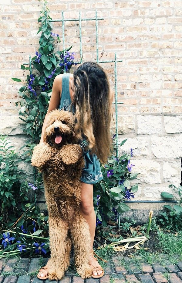 liveloveevintage:  freepeople:  A girl, her dog, and her romper.Shop this look here!  Oh my gosh my dream dog