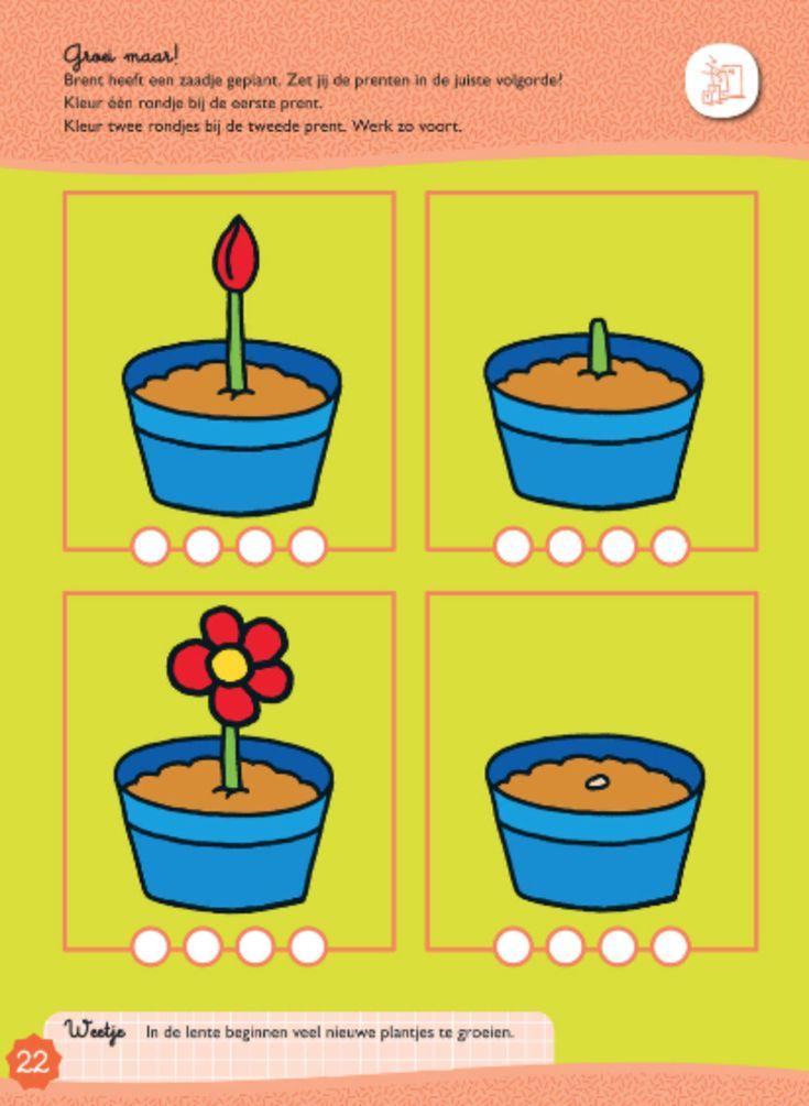 Een bloem die groeit: chronologisch rangschikken