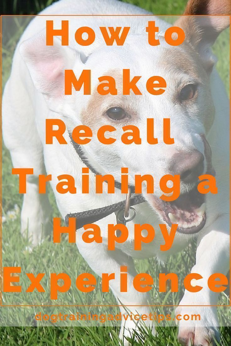 Making Recall Training A Happy And Memorable Experience Dog
