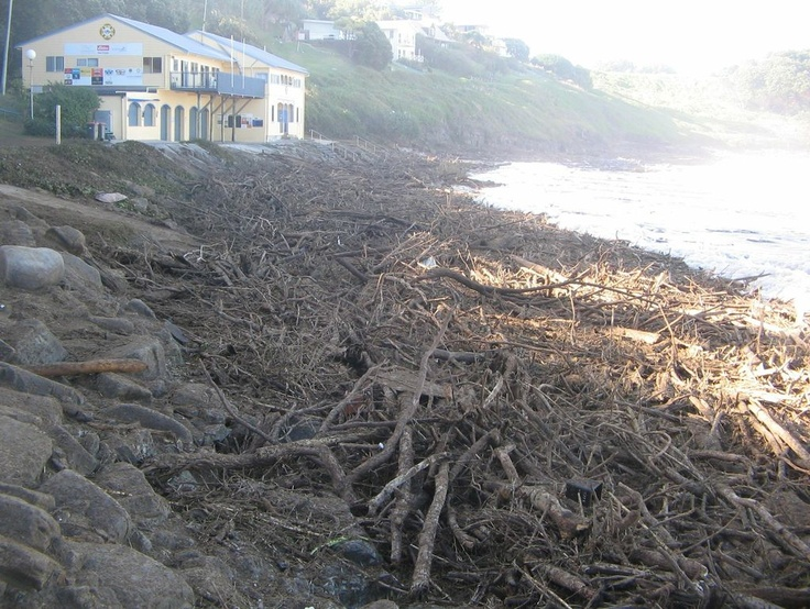 Aftermath of NSW's biggest flood in the Clarence River with Yamba Beach totally covered with tree trunks and branches - amazing the power of mother nature