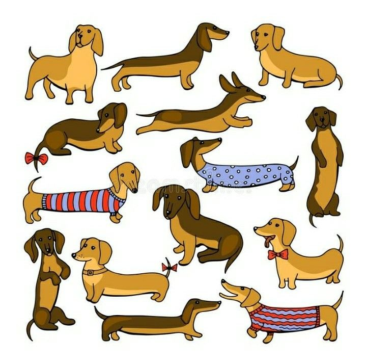 Dachshund Dachshund Illustration Cartoon Illustration Dachshund