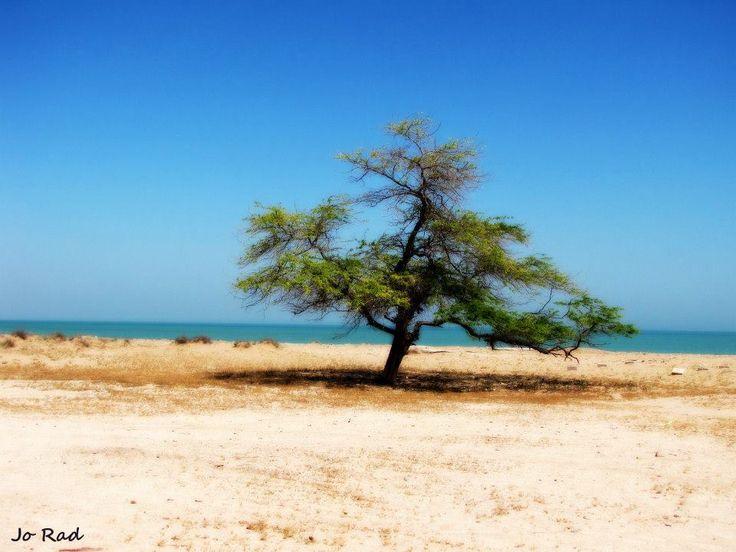 Tree of Life :) Failaka Island. Photo: Jo Rad