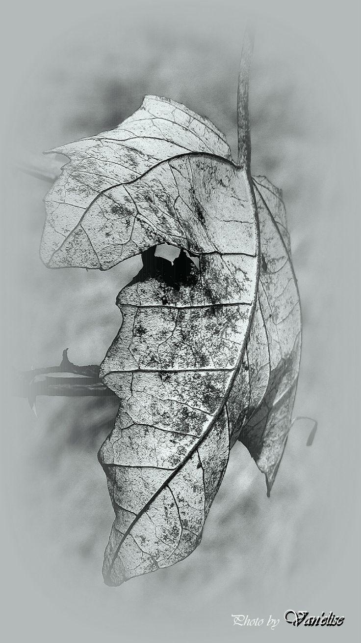 A tél művészete (Van'elise) Saját fotó