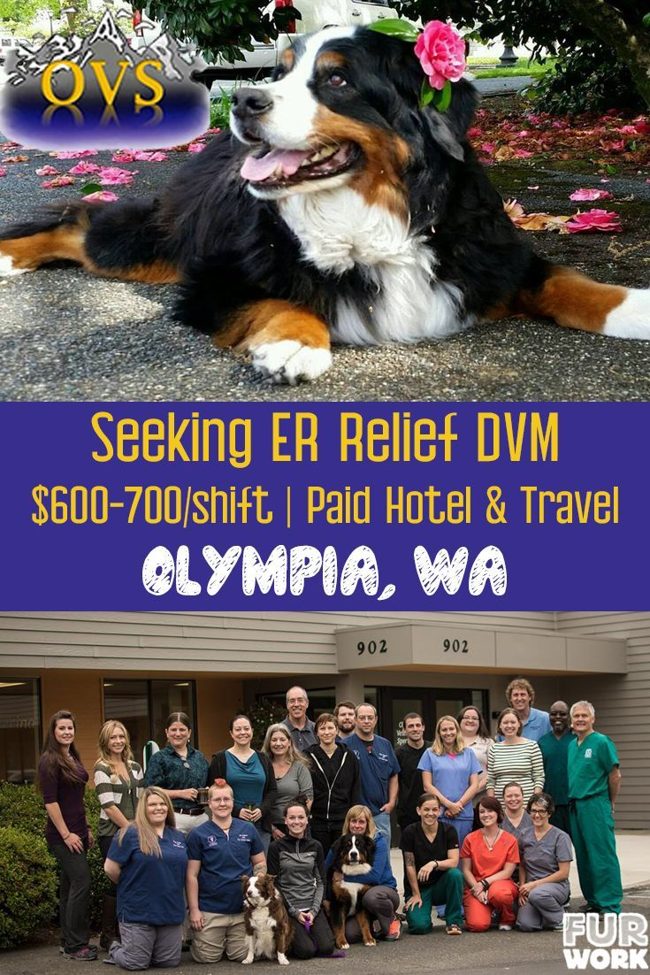 Relief Emergency Veterinarian At Olympia Veterinary Specialists Veterinarian Vet Jobs Veterinary