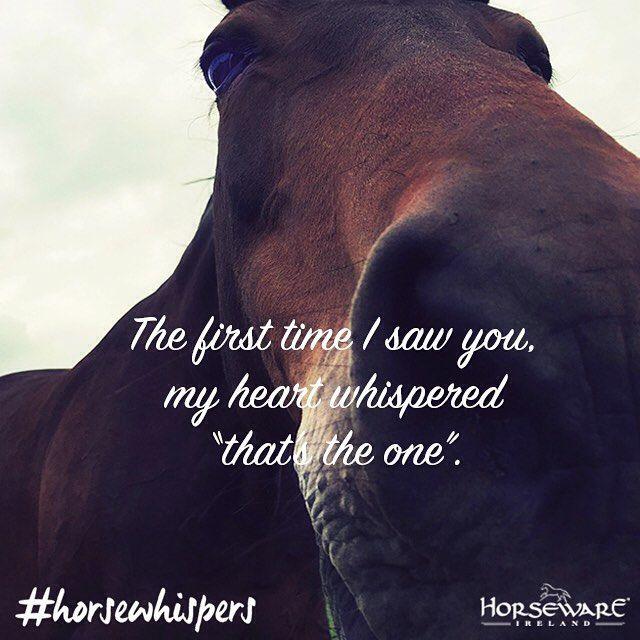 Frase caballo