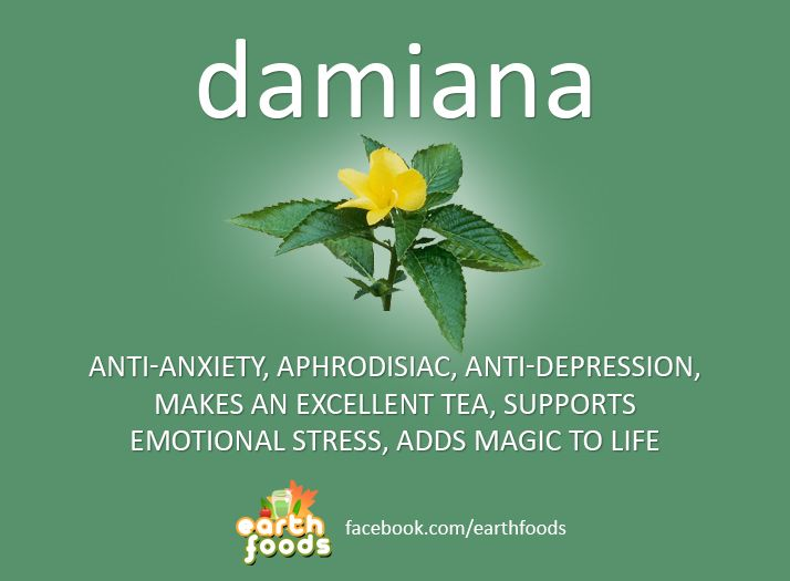 Damiana (Turnera Diffusa) is a mood-enhancing / anti-anxiety medicinal herb native to Mexico & Southern U.S.. Learn about Damiana and its health benefits.