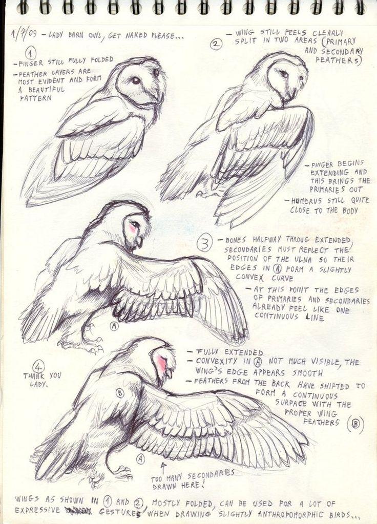 170 Best References Bird Images On Pinterest