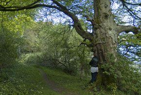 View of beech tree near lakeside