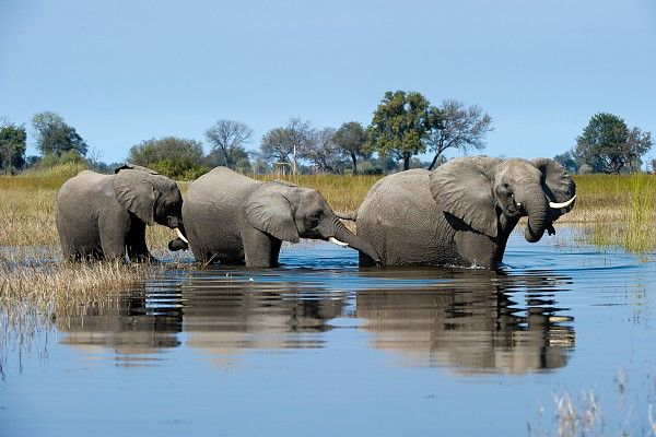The Okavango Delta's inscription as a World Heritage Site is a major conservation milestone #FollowMyLeader #VumburaPlains