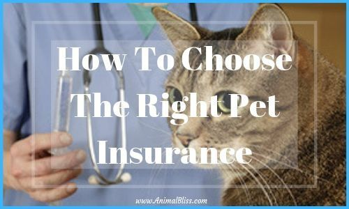 How To Choose The Right Pet Insurance Unlikely Animal Friends Animal Humor Dog Pets
