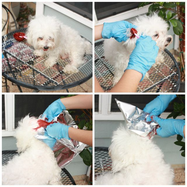 dyeing your dogs hair