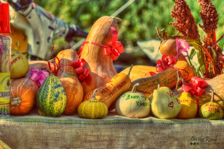 Beautifully decorated pumpkins at the Kikinda Pumpkin Festival