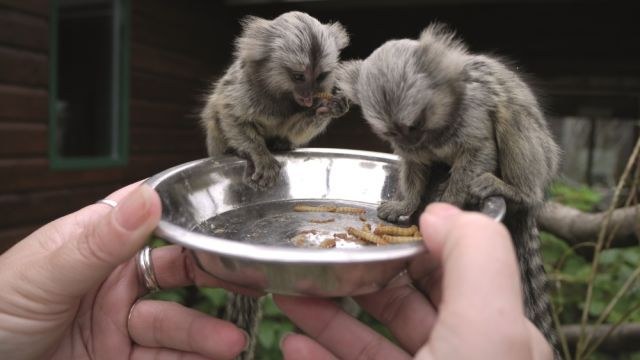 England's best small tourist attraction: Monkey Haven, Isle of Wight