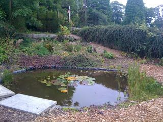 Ponds in schools and nurseries   Creative STAR Learning   I'm a teacher, get me OUTSIDE here!