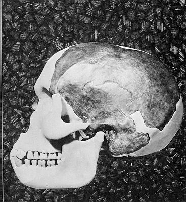 Skull of the Piltdown Man