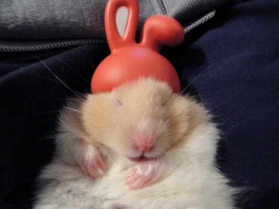 That is NOT a HAT that Fuzzybutt is WEARING!!! (But it ees, eet EES!)