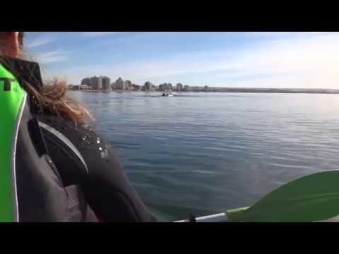 Они просто катались на лодке, как вдруг...    Самое интересное с 50 секунды
