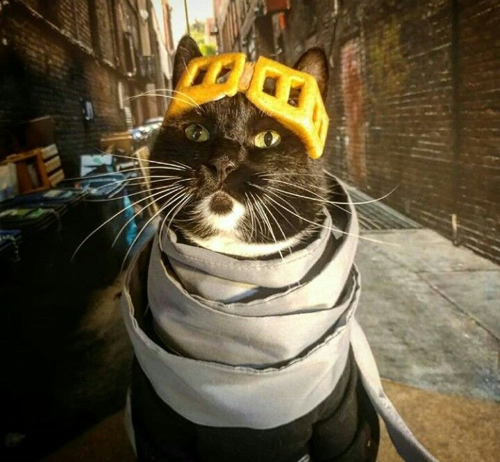 Cat Cosplay, Funny Animal Pictures, Funny