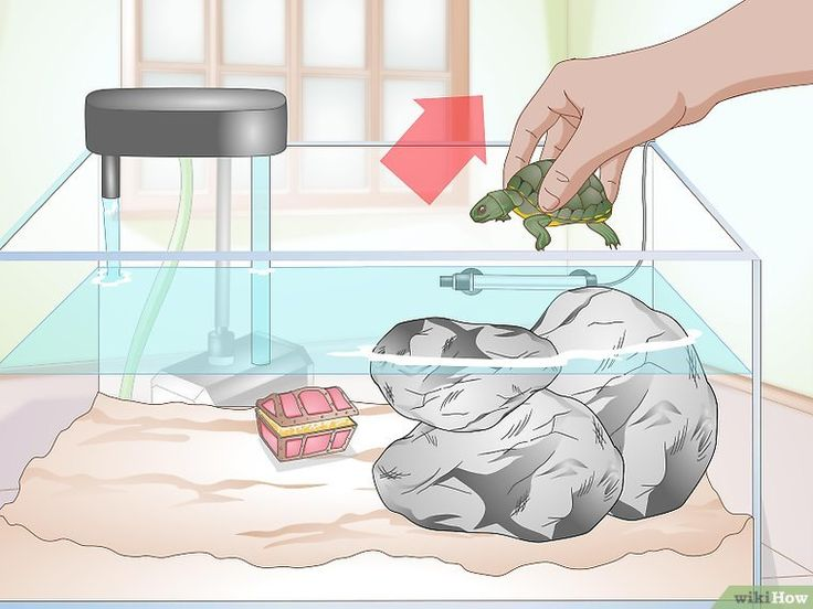 3 Ways to Clean a Turtle Tank - wikiHow