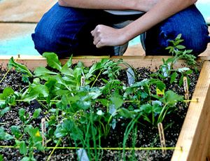 17 Best 1000 images about EARTHBOX GARDENING on Pinterest Gardens