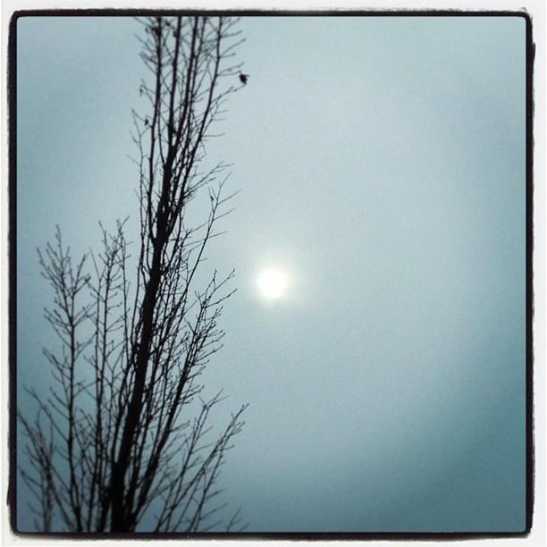"@mauroparolo's photo: ""#sun ##tree #cloudy"""
