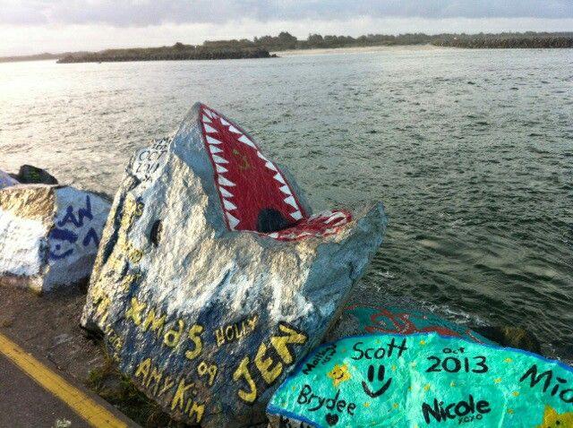 Shark Port Macquarie, NSW Australia