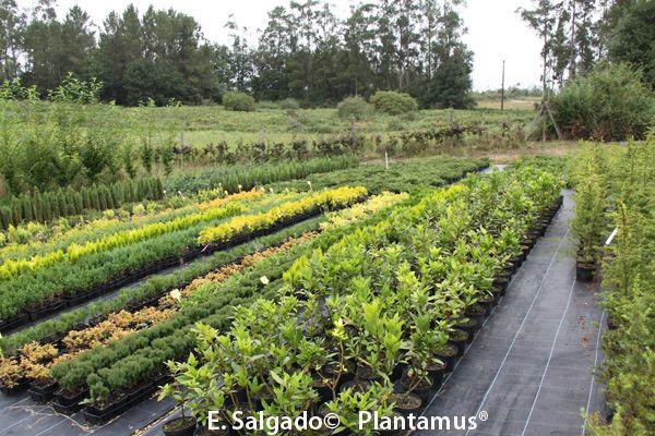 Viforsa, S.L. Plantamus®