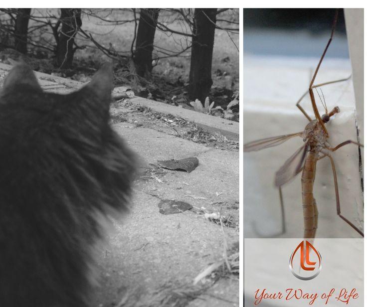 Lieve #LivelyLives women of today, vandaag een regenachtige zondag met zomerse temperaturen. Met weemoed zien we de herfstblaadjes neervallen terwijl de muggen nog rijkelijk zoemen. Zo'n dag waarop je je was wegwerkt, de boel aan kant maakt, wat werkt en dan met je huisgenoten (inclusief die met een vacht) op de bank kruipt voor een film of met een goed boek en een kop thee. En geniet van deze zondag. Herken je dit?