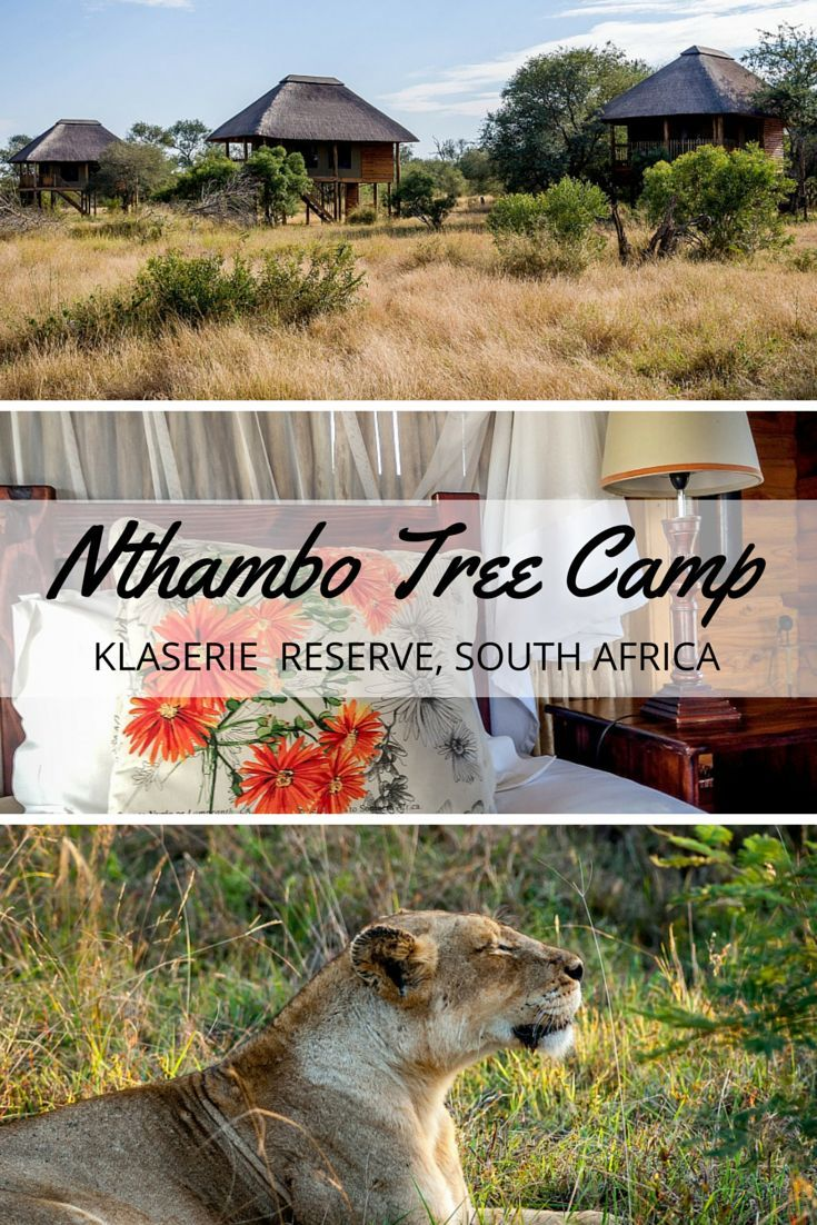 In the Klaserie Private Nature Reserve of South Africa, nThambo Tree Camp is luxury safari lodge with excellent food and even better guides