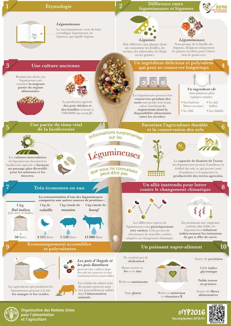#Infographie : ces choses étonnantes que vous ignoriez sur les légumineuses ! par la #FAO   #AIL2016 #IYP2016 #pulses #nutrition #environnement légumes secs