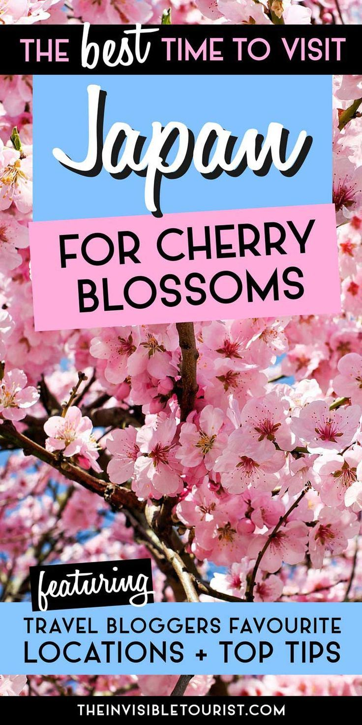 The Best Time To Visit Japan For Cherry Blossoms Revealed Visit Japan Japan Japan Travel