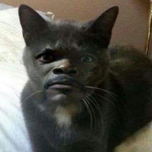Weird Cat Faces Samuel L. Catson?? #fr...