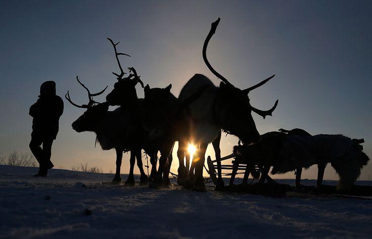 District autonome de Iamalo-Nénétsie, Russie, 21 mars. Jour des éleveurs de rennes dans la ville de Nadym. (Crédit : AP Photo/Dmitri Lov