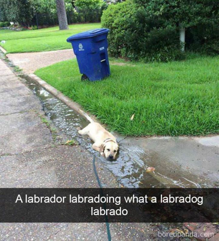 Funny Animal Pictures Dump of the Day - 2