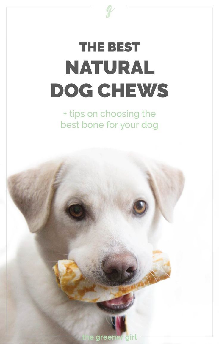 The Best Natural Dog Chews And Bones Dog Chews Aggressive Dog