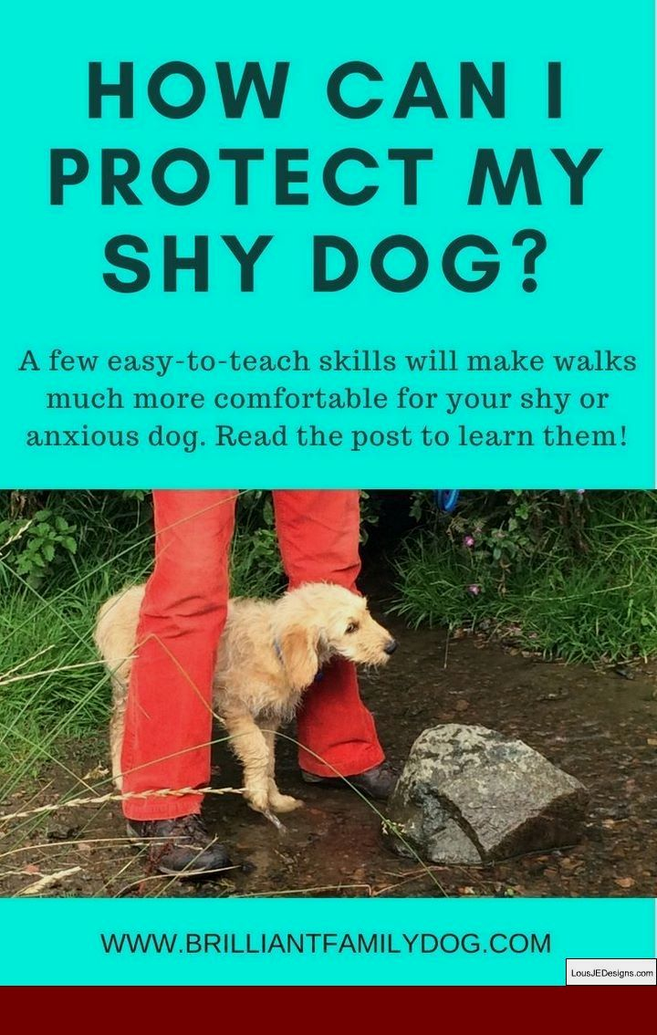 How To Train Your Dog To Stay By Your Side And Pics Of Dog