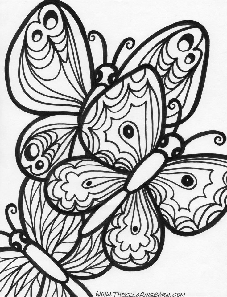 Detailed coloring pages for adults printable butterfly for Coloring pages of butterflies for adults