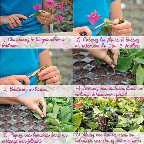 109 best images about jardinage on pinterest gardens legumes and un. Black Bedroom Furniture Sets. Home Design Ideas