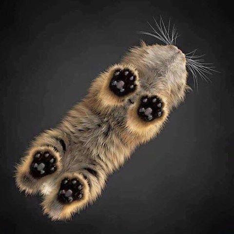 ❤❤❤ #catloversclub #cat #cats #catofinstagram #catoftheday #catlover #catsagram #catlovers #cat_features #catlady #sweetcatclub #catholic #catlife #catlove #catsgram #cutecat #cutecats #cutest #meow #kittycat #topcatphoto #kittylove #mycat #instacats #instacat #ilovecat #kitties #gato #kittens #kitten
