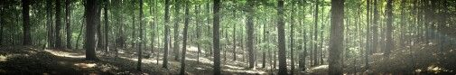 Red Top Mountain, Georgia Hiking