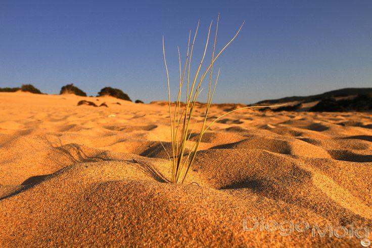 Dunes of Piscinas, Sardinia #ledunepiscinas #piscinas #sardinia