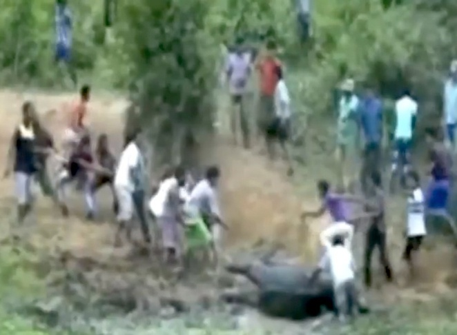 Indian villagers rush to the rescue of a baby elephant (Video)