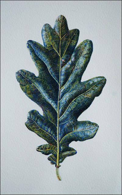 Study of Oak leaf