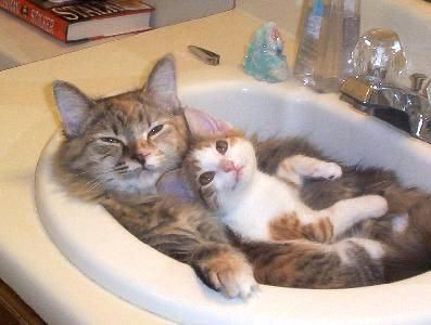 cuteSnuggles, Kitty Cat, Funny Cat, Bathroom Sinks, Kittens, Hot Tubs, Cat Photos, Bath Time, Animal