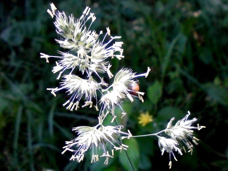 Цветёт трава